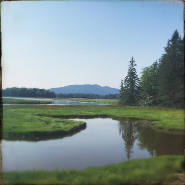 Maine marsh.jpg